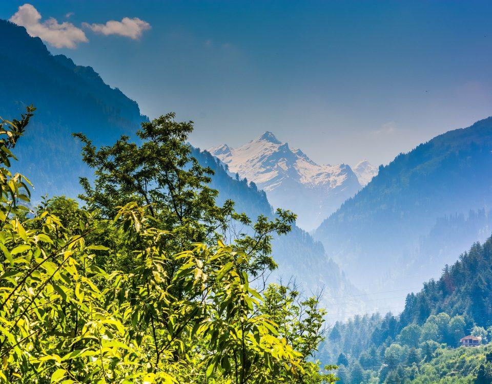 Neem kruid - Himalaya Herbals